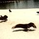 Scavenger birds sunning themselves