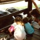 Children viewing the tortoises