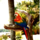 We were greeted by this beautiful parrot.