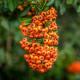 Macro flora by RD Honde.  Nikon 24.0 - 120mm Lens at 86mm, f/4, 1/640 sec, ISO 800.