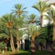 Stately date palm trees