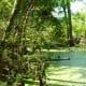 Bald Cypress tree knees in a swampy area near Houston