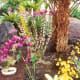 Numerous orchids and other plants