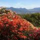 pictoral-views-of-queen-elizabeth-park--bloedel-conservatory-in-vancouver