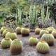 Cacti in Jardin Botanico Canario.