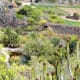 Jardin Botanico Canario.