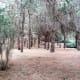 Pine forest in Jardin Botanico Canario.