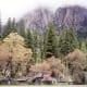 On the valley floor of Yosemite