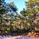 Illusion of Snow, Hobe Sound Scrub Preserve