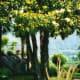 Lush foliage and great views