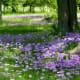 Cemetery wildflowers