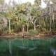 crystal-river-manatee-endangered-species-florida-sea-cow