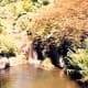 The natural garden