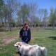 Waco enjoying the dog park.