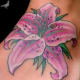 A Pink Lily With Green Leaves