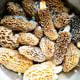 Morels store well in a bowl of salt water in the refrigerator.