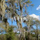 Lovely sky, trees, and Spanish moss in the park