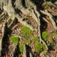 Moss growing near tree roots