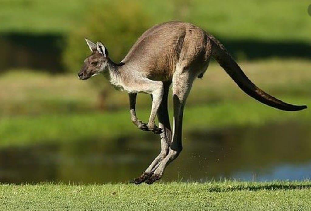 Adventure Tours of Australia