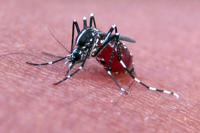How to Get Rid of Mosquitoes - Dengarden - Home and Garden