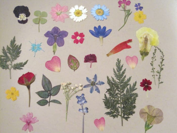 A pressed flower assortment for crafts and jewelry.