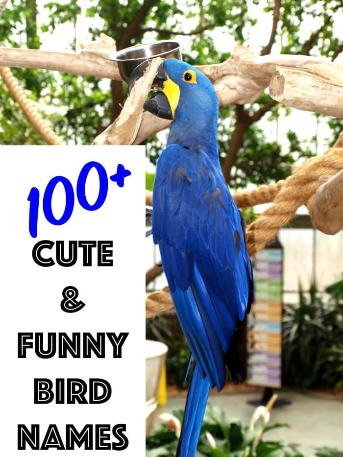 Oltre 100 nomi carini e divertenti per ogni tipo di uccello.