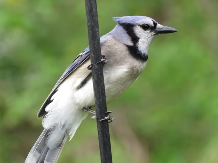 Common Types of Backyard Birds in the Northeast ...