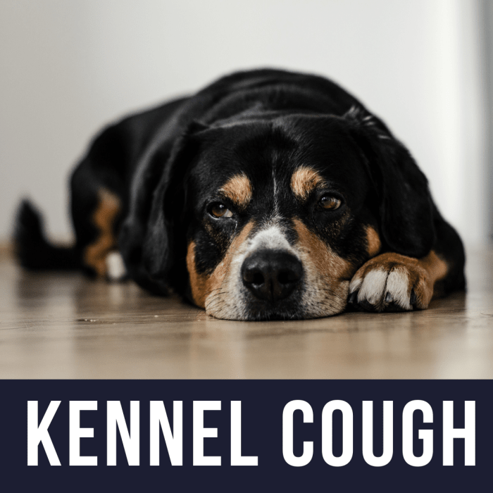 My Dog Has Kennel Cough: What Do I Need To Know
