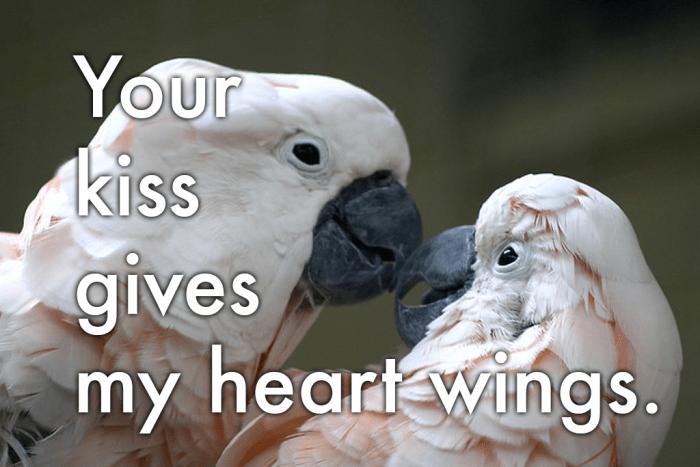 """Przesłanie miłosne dla ptaków z piór: """"Twój pocałunek dodaje mojemu sercu skrzydeł.""""""""Your kiss gives my heart wings."""""""
