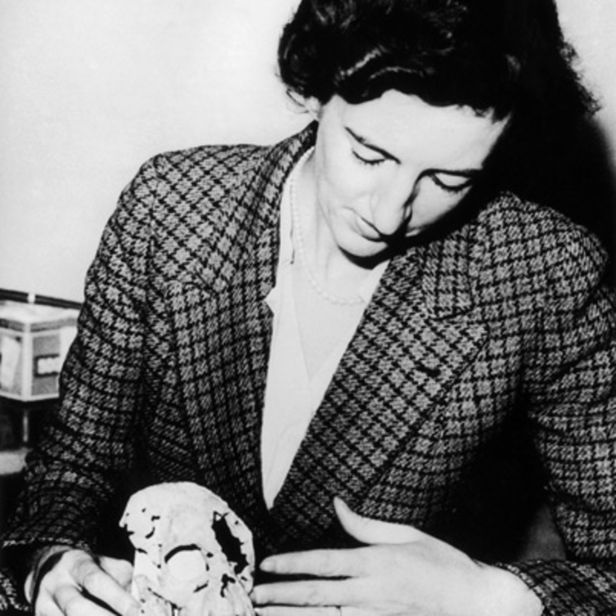 a biography of mary leakey an anthropologist Mary leakey's wiki: biography childhood mary leakey was born mary douglas nicol on 6 february 1913 mary leakey, archaeologist and anthropologist.
