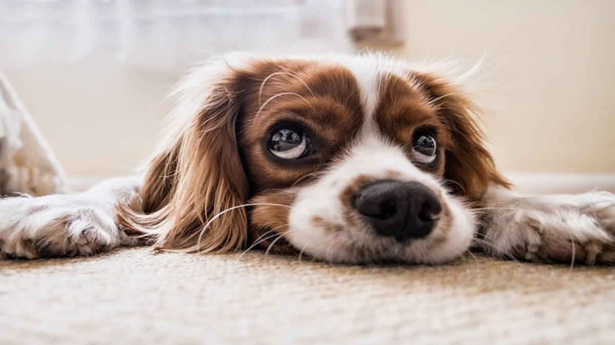 Why Do Dogs Dig At Carpets
