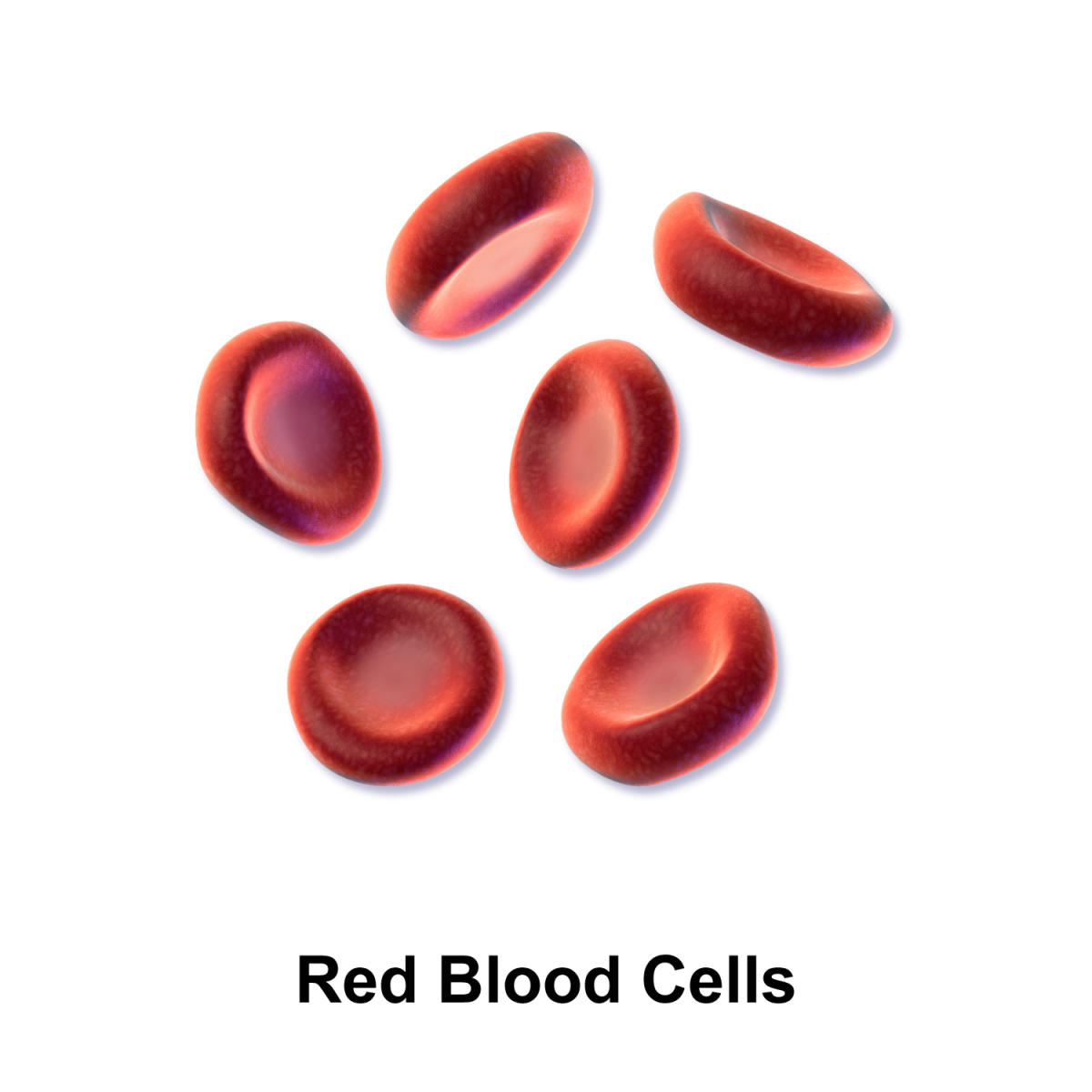 Anemia involves a problem with red blood cells.