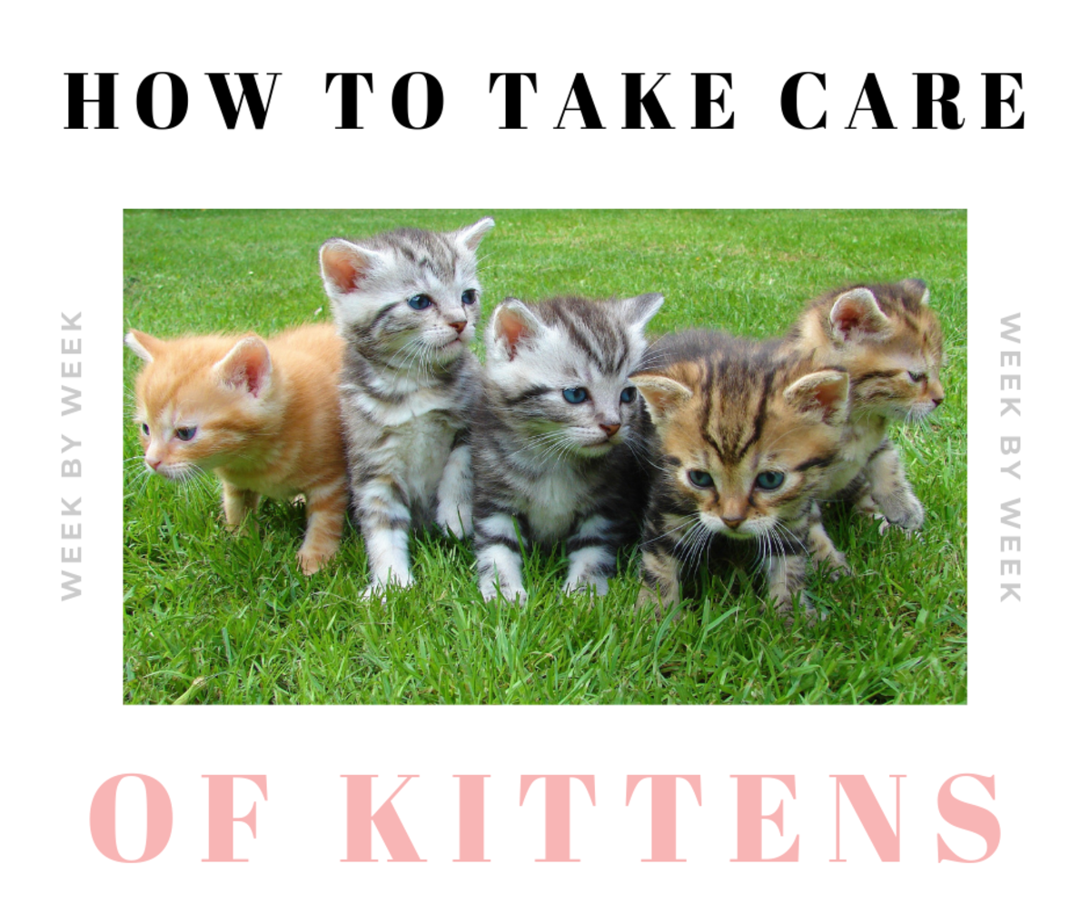 How to Take Care of Newborn Kittens:  Week by Week