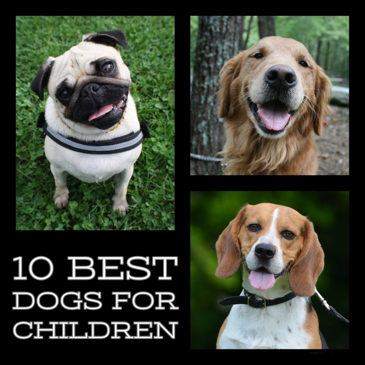 The 10 best dogs for kids.