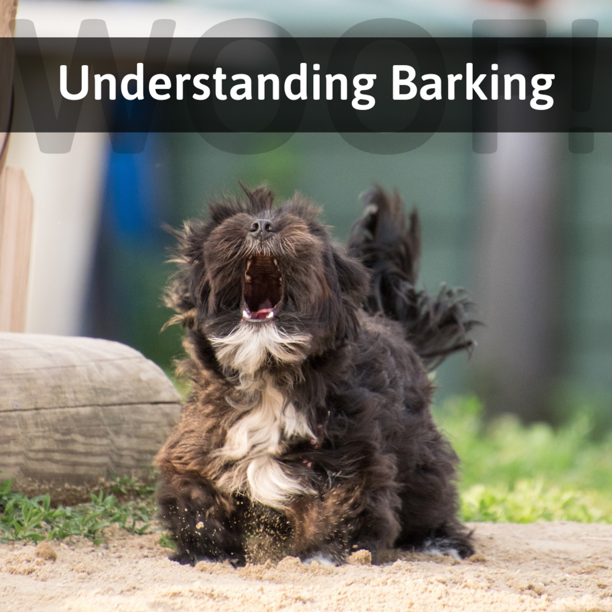 Learn why your dog barks, plus more information on canine communication and body language.