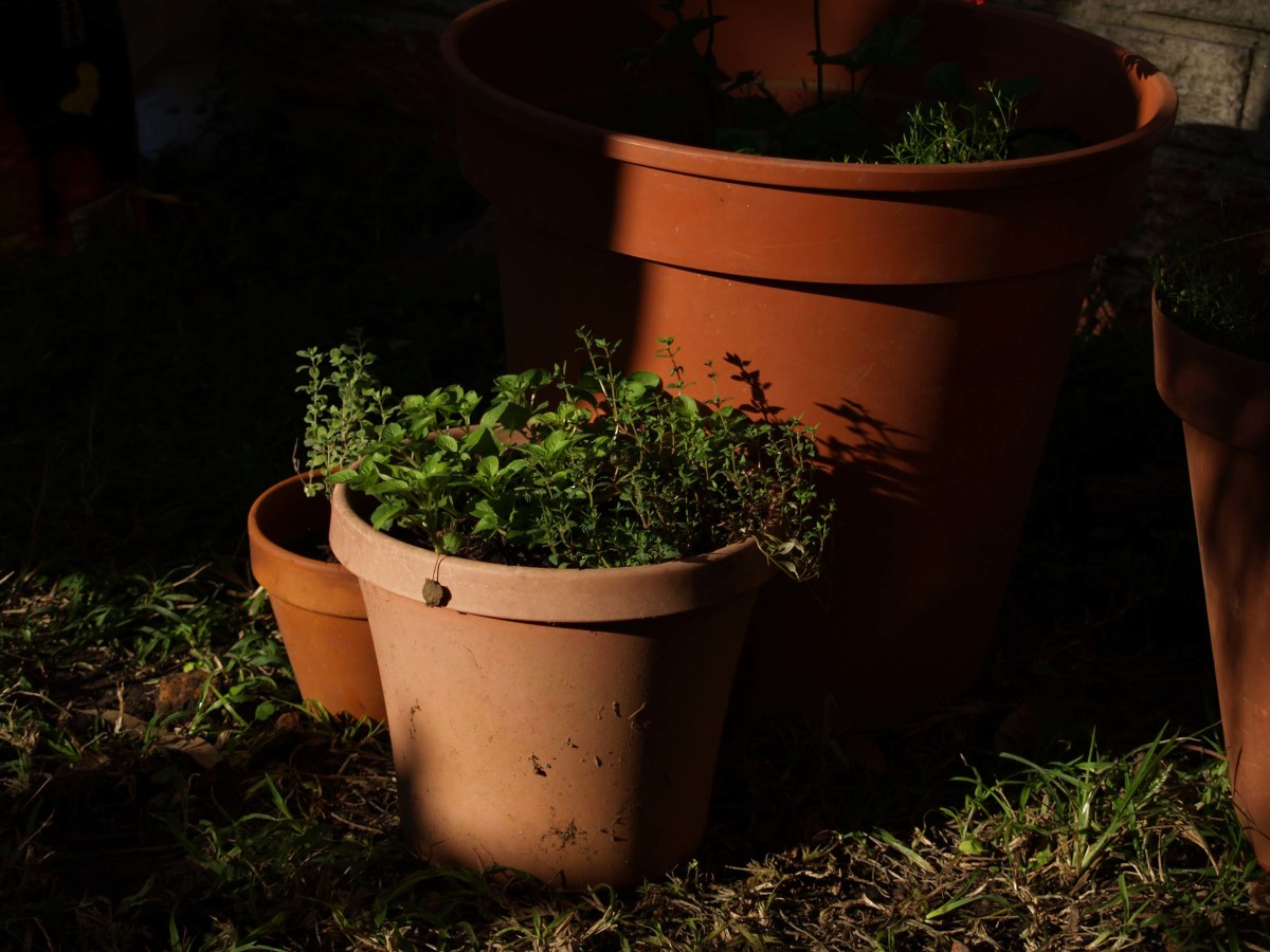 Bringing Herbs in for the Winter - How to Grow and Enjoy Herbs Every Season