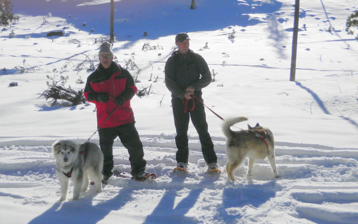 Dog Friendly Winter Sports Trails In Central Oregon For Snowshoeing And Other Sports