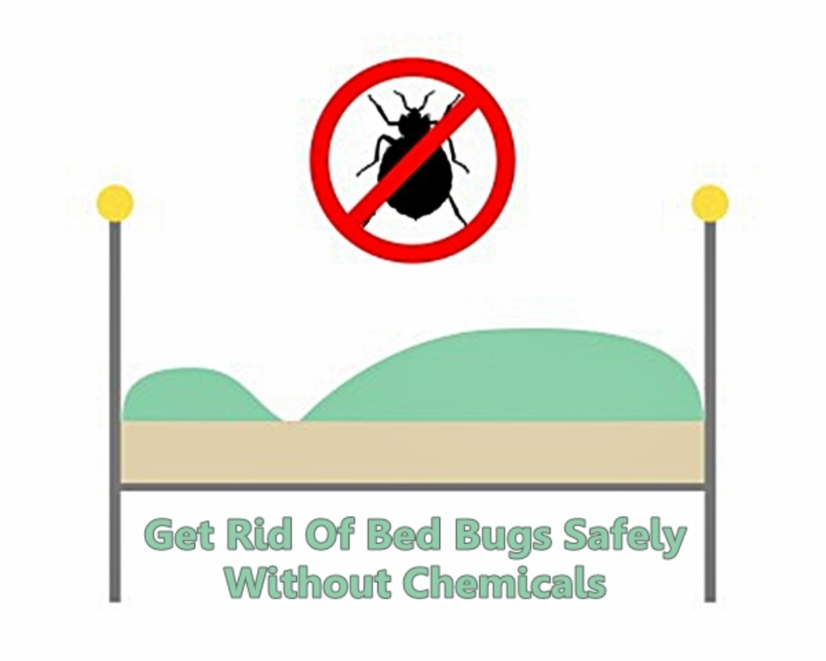 Killing Bed Bugs Without Chemicals or Pesticides