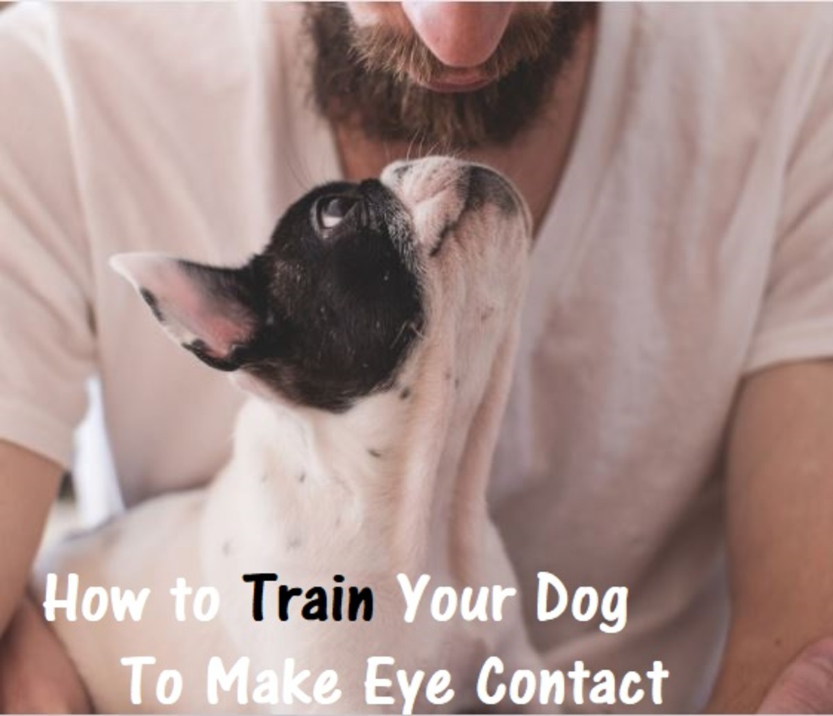 How to Teach a Dog to Make Eye Contact