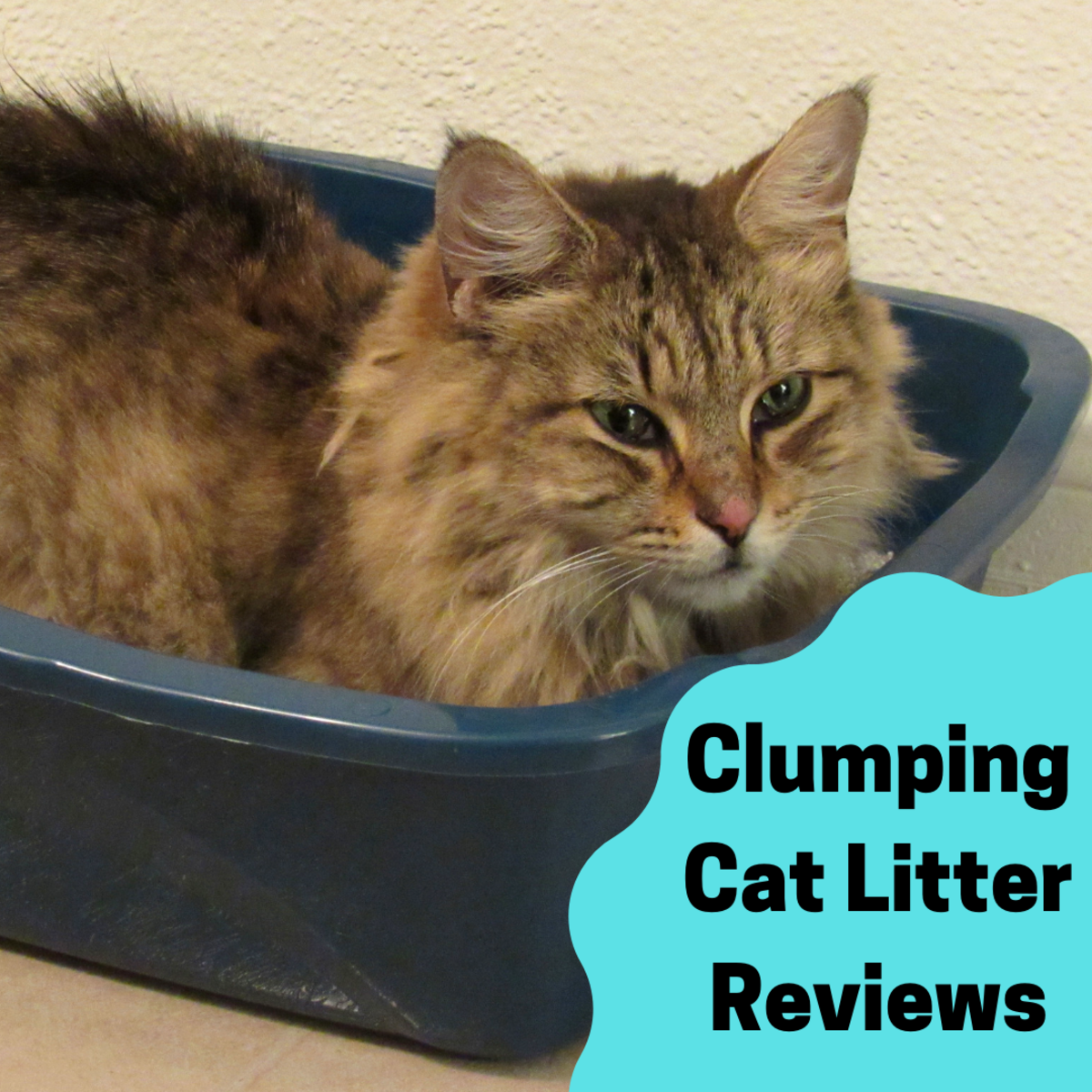 Cat Litter Reviews: Brand Reviews and the Best Clumping