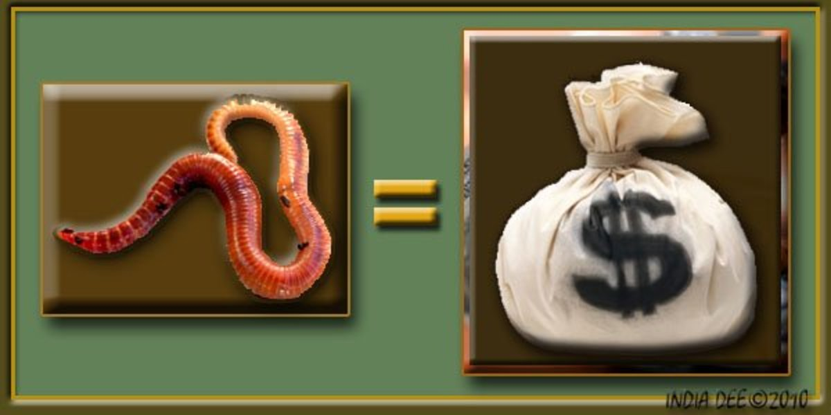 Raising worms equals making money!