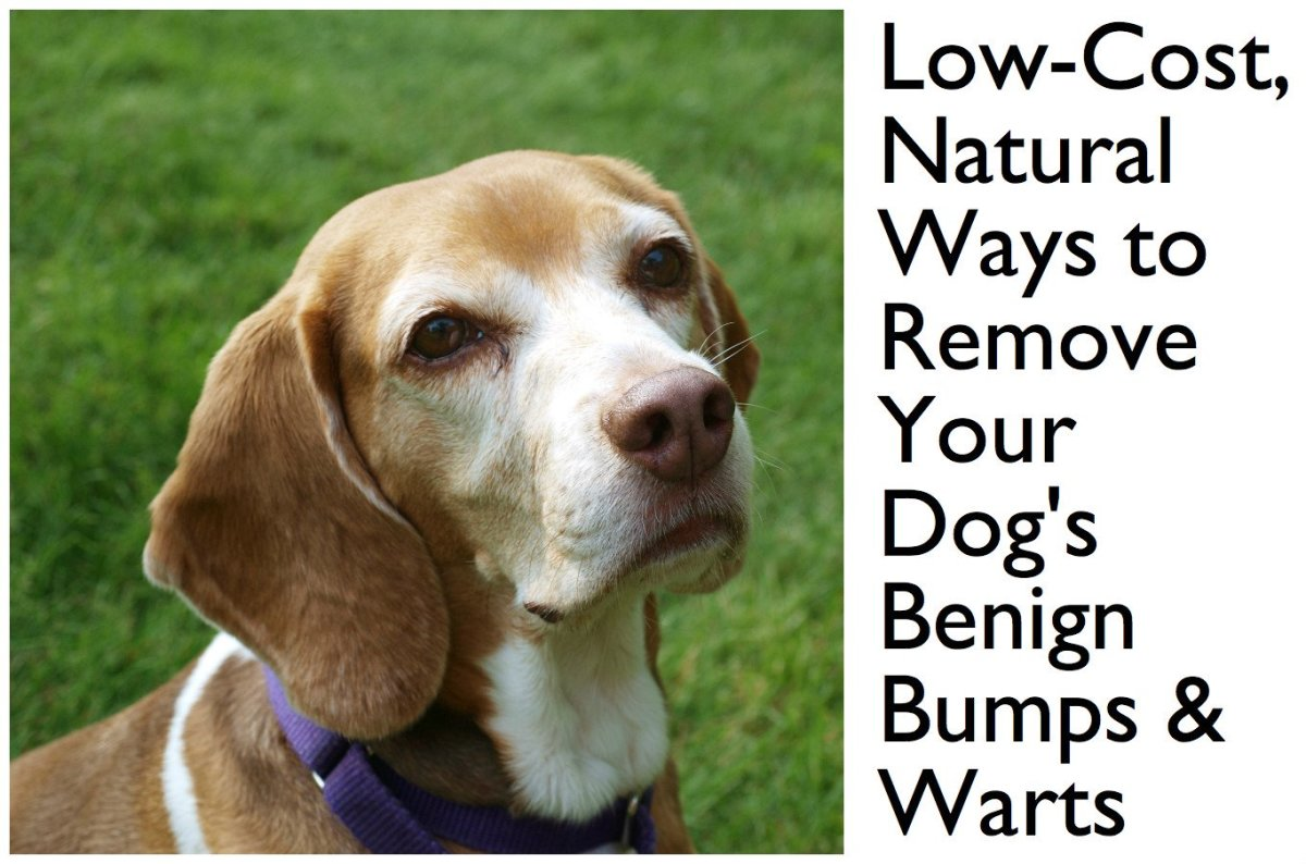 How to Get Rid of Growths on Dogs for Under Five Dollars | PetHelpful