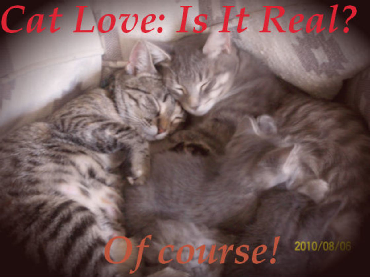 Cat Love: Is It Real? Of course!