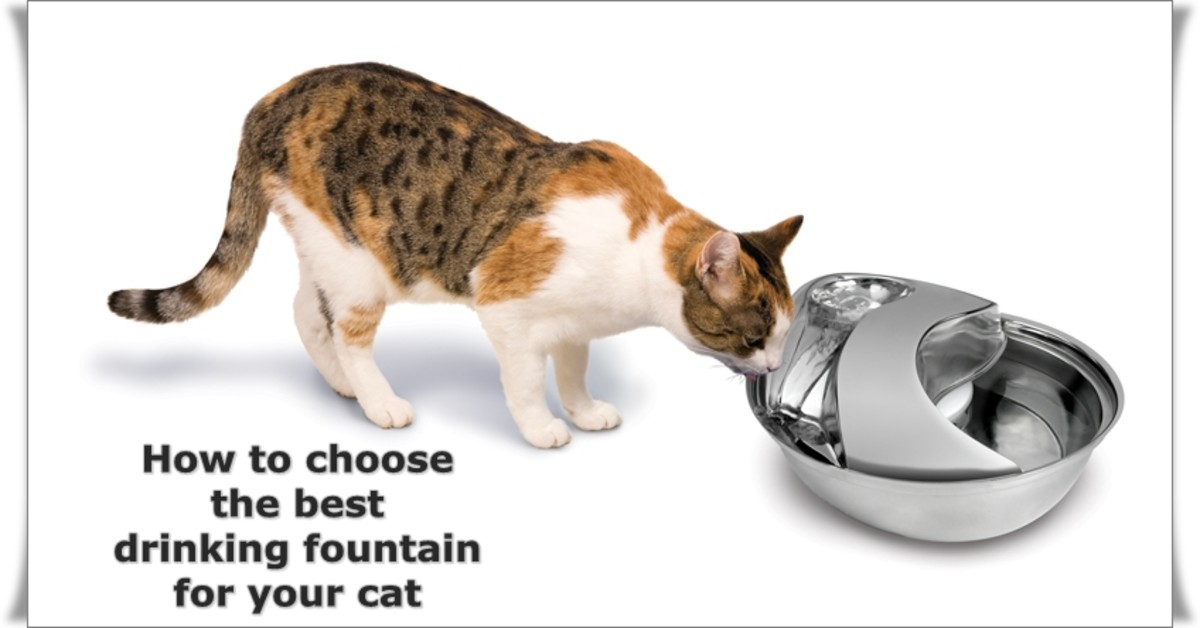 Continuously filtered water in a pet fountain is healthy and encourages you cat to drink.