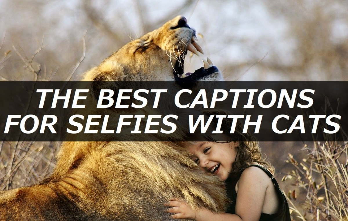 100+ Best Captions for Selfies With Cats