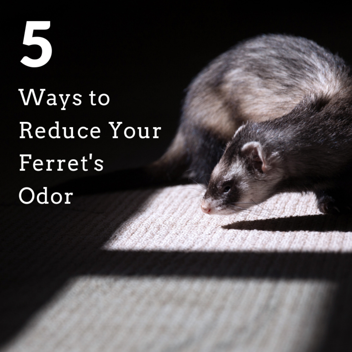 Ferrets make great pets but they can be a bit musky at times . . .