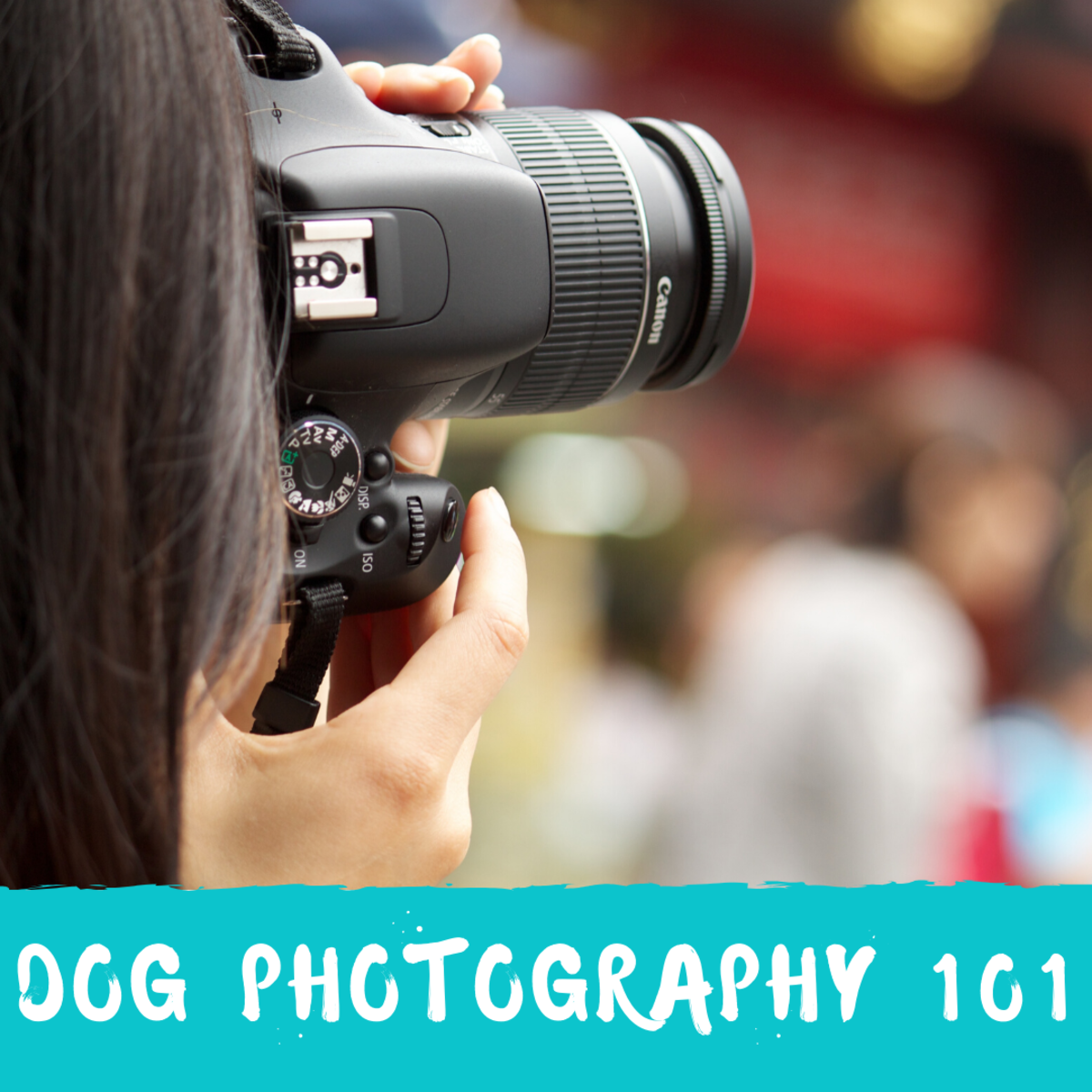 A Dog Photography Tutorial for Beginners