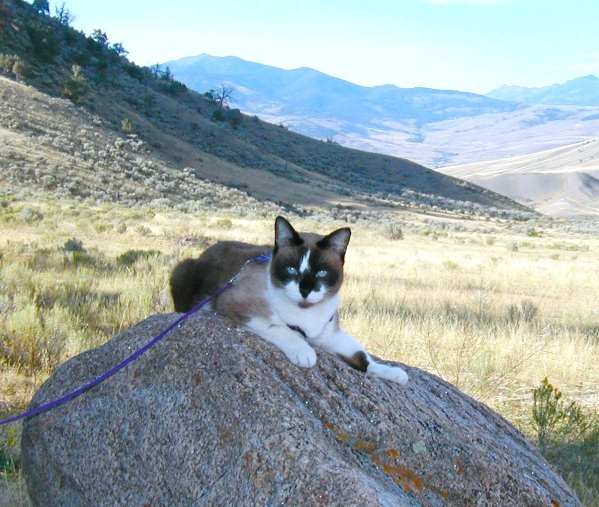 traveling with cats in rv or car pethelpful
