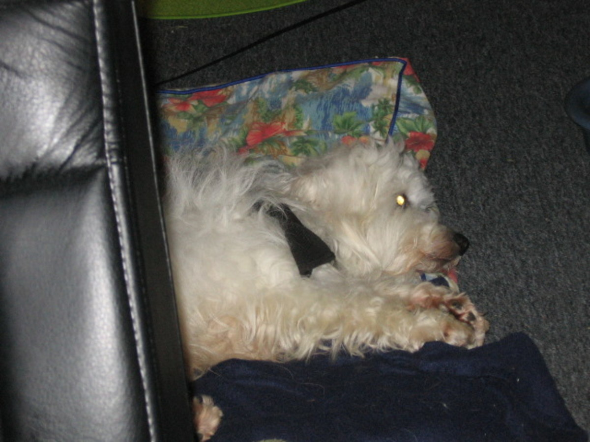 Do not disturb. Dog at rest.