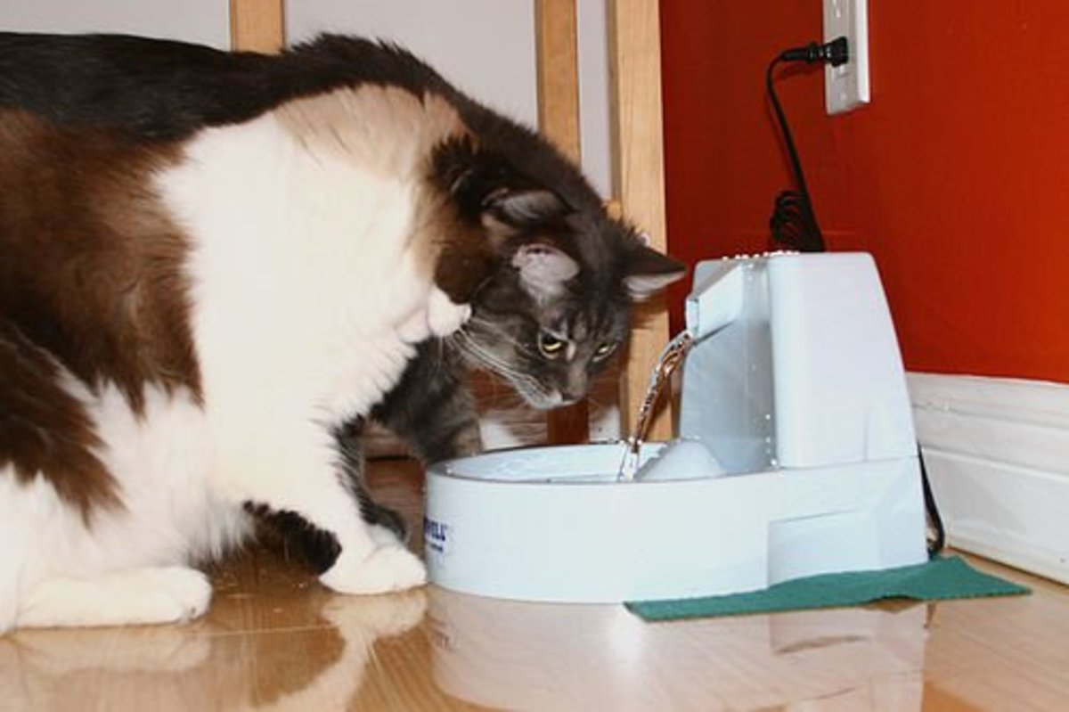 Best Cat Water Fountain What To Look For In A Cat